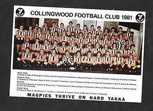 COLLINGWOOD FOOTBALL CLUB 1981 YAKKA TEAM PHOTOGRAPH & SIGS Tuerong Mornington Peninsula Preview