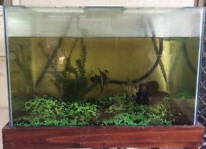 Fish tank on stand Anula Darwin City Preview