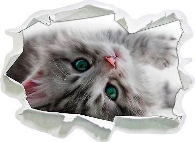 Süßes Katzenbaby - 3D-Look Papier Wandtattoo Aufkleber-Sticker (Wand Papier Dekoration 3d)