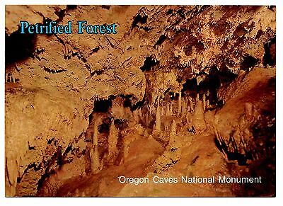 Petrified Forest Postcard Oregon Caves National Monument Stalactites Columns -