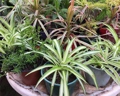 Excellent variety of indoor plants in pots. Most $3
