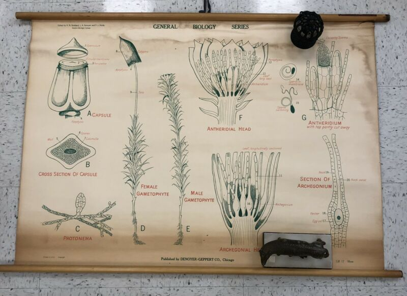 Vtg Moss School Classroom Chart Poster Biology Science Pulldown Male Female
