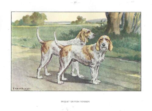 1930s Castellan France Dog Art Watercolor Print BRIQUET GRIFFON VENDEEN HOUND