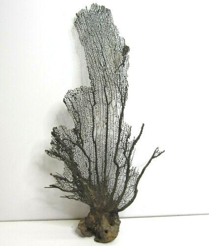 Kelp Plant Seaweed Sea Nautical Beach Ocean Natural Decor