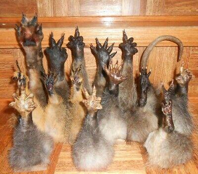 14 paws 1 opossum tail. Raccoon,Opossum,Squirrel,Muskrat,Red Fox