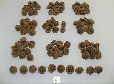 100 Dried Button Acorns Real Michigan Oak Tree Art-Craft Fall School Project Lot