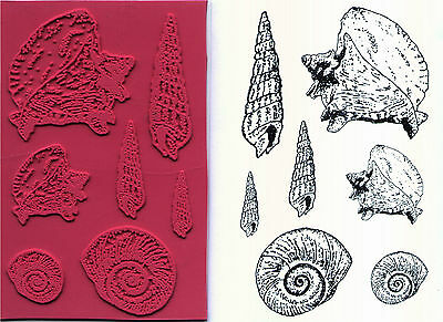 unmounted rubber stamps Auger, Moon & Conch Shells   7 images