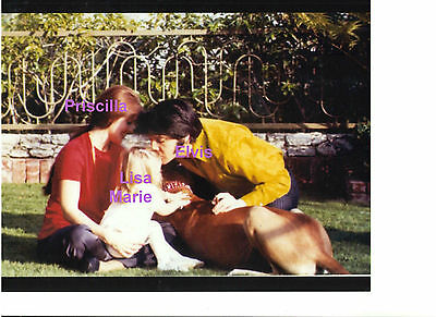 ELVIS PRESLEY PRISCILLA LISA MARIE GREAT DANE DOG LOS ANGELES 1970s PHOTO CANDID ()