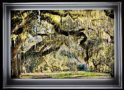 "Trees By Darren Moore LED light framed photograph 1/4""x 20"" x 30"" acrylic gl"