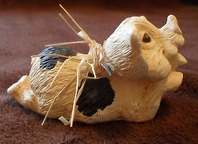 Rarität: geflecktes Schwein mit Riesenohren, aus USA, Schweine, Sau, Ferkel, 6