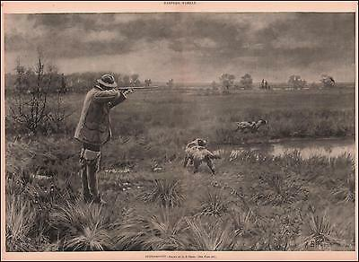 SNIPE Bird Shooting, Hunting Setter Dogs by A B Frost, large antique print 1892