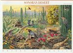 SONORAN DESERT STAMPS AND POSTCARDS