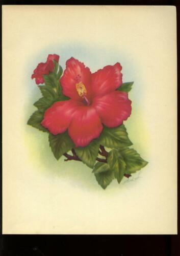 1947 RED HIBISCUS Flower Print by Mundorff, In an Old Hawaiian Garden book