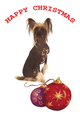 CHINESE CRESTED SINGLE DOG PRINT GREETING CHRISTMAS CARD