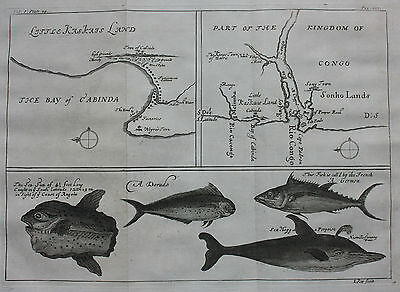 Original antique map AFRICA, CONGO, ANGOLA, CABINDA BAY, FISH, Barbot, Kip, 1744