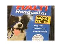 Halts dog headcolar