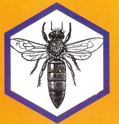 NY Bee Wellness