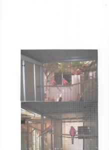 ROSA BOURKES PARROTS Mildura Centre Mildura City Preview