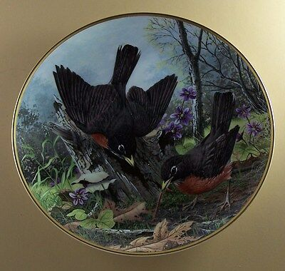 ROBIN Hunting for Food A J Rudisill Plate The National Audubon Society Bird 1983