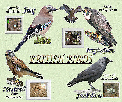 BRITISH BIRDS DESIGN MOUSE MAT. GREAT GIFT FOR BIRD LOVERS D3