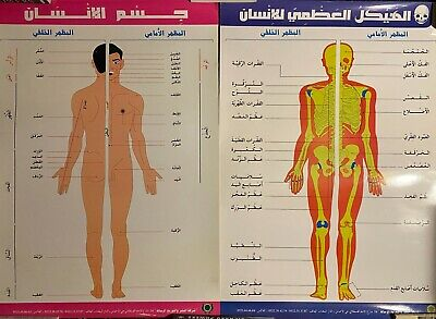Lot Of 2 Large Moroccan Arabic Anatomy Medical Instructional Charts Posters