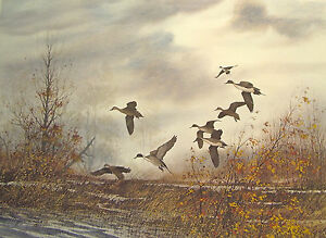 David  Hagerbaumer hand  Signed limited edition print of waterfowl Pintail Ducks