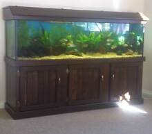 6  foot Fish Tank and cabinet Inverell Inverell Area Preview