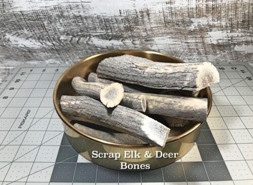 One (1) Pound of Scrap Whole or Split Elk and Deer Antlers- Dog Chews