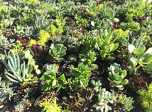 Succulents from $3 Huonville Huon Valley Preview