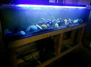 Custom Made Fish Tank Aquarium 2300x450x415 Wyee Lake Macquarie Area Preview