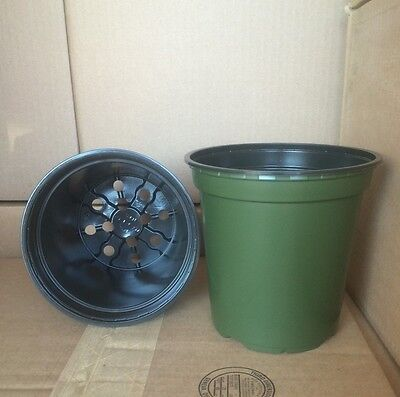 1 gallon trade plastic Nursery 6