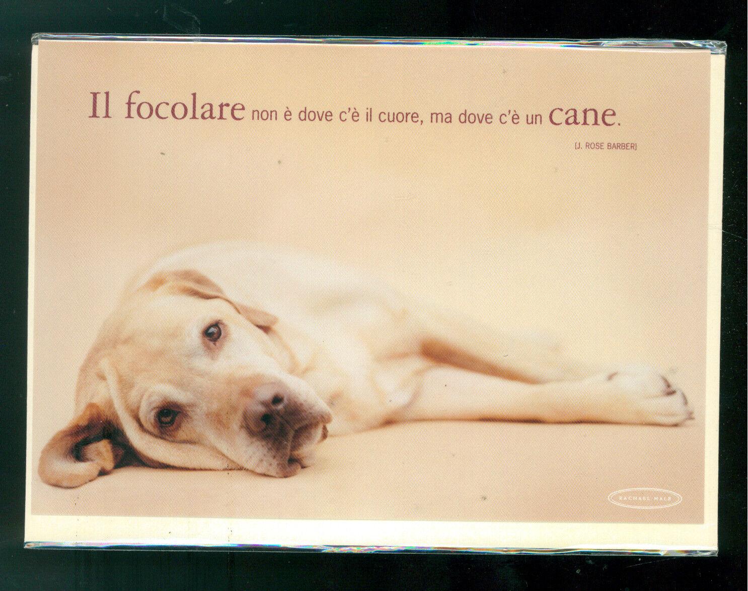 RACHAEL HALE BIGLIETTO AUGURI GIFT CARD MEDIO CANE DOG 2004 SPENCE