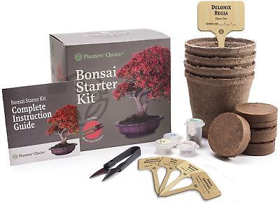 Planters Choice Bonsai Starter Kit - The Complete Kit To Easily Grow 4 Bonsai
