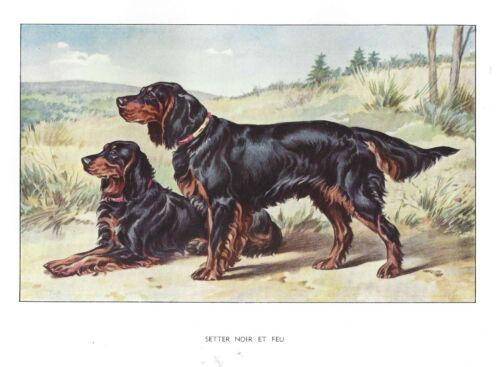 Rare 1930 Art Francois Castellan France Dog Watercolor Print GORDON SETTER