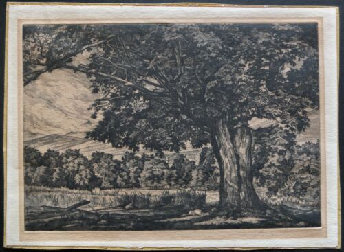 Luigi Lucioni Signed 1947 Etching The Spreading Maple From Edition Of 250