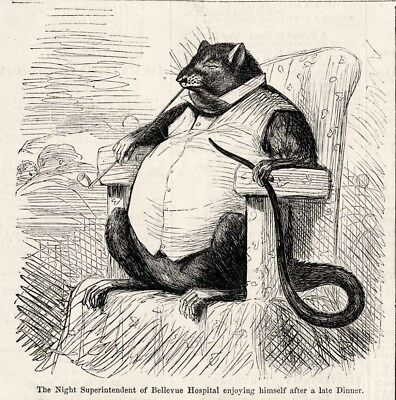 A Cartoon Rat (Bellevue Hospital Superintendent as a Wharf Rat Cartoon - Infant chewed to)
