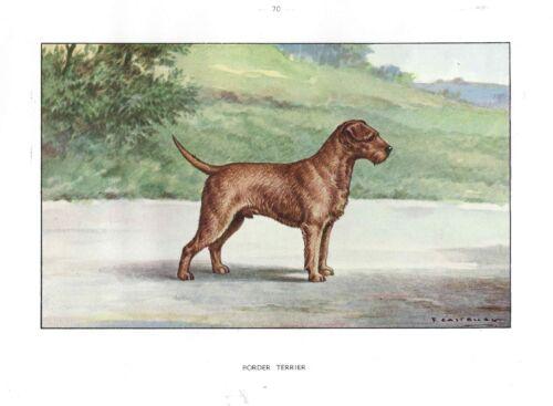 Rare 1930 Art Watercolor Castellan France Dog Portrait Print BORDER TERRIER