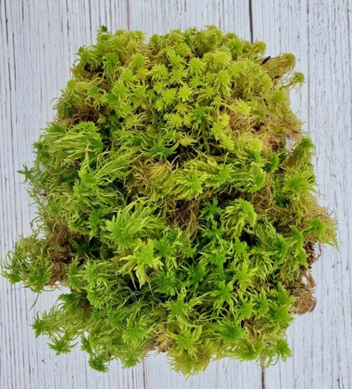 Live Fresh Sphagnum Moss  6x9 Bag, Terrarium, Paludarium, Vivarium, Carnivorous
