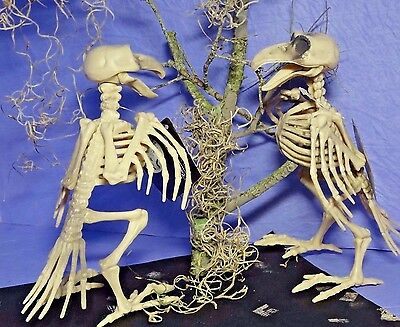 Halloween Skeleton Crow Raven Moss Scary Haunted House Prop Party Decoration )