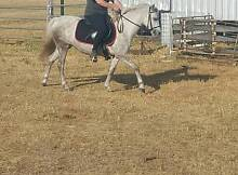 Great kids pony for Christmas Pinjarra Murray Area Preview