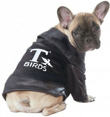 Grease T Birds Greaser Pet 50S Pet Dog Cat Halloween Decades Costume Jacket](Grease Halloween Costumes For Dogs)