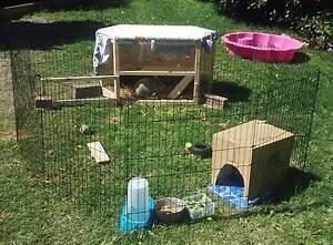 Small Animal Hutch Hampton Park Casey Area Preview