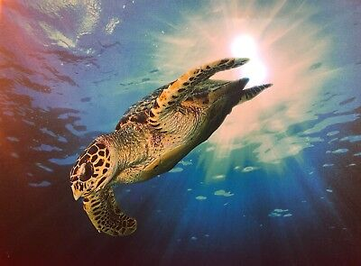 Sea Turtle LED Light Up Lighted Canvas Painting Picture Wall Art Home (Led Art)