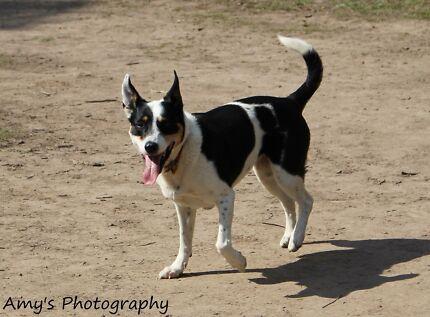 Dog training Group Class starting NARRE WARREN!