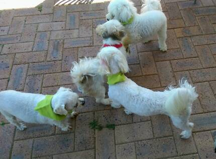 Wanted: Dog Walker In Your Area