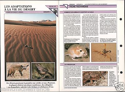Suitability Animals Adaptation Animaux Desert Fennec Scorpions Rats FICHE - Desert Animals Adaptations