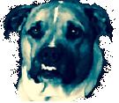 straydog fan apparel