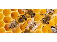 Bee keeping equipment - complete set