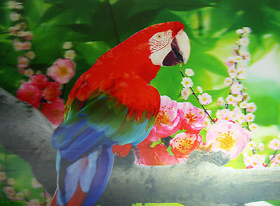 3D Lenticular Poster - Colorful PARROT with Flowers - 12x16 Print - Wild Birds