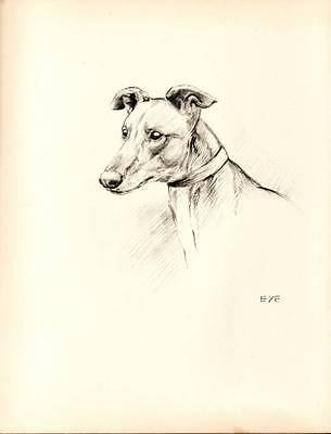 1933 Lovely Vintage Dog Print Original Pen & Pencil Sketch by K.F. Barker